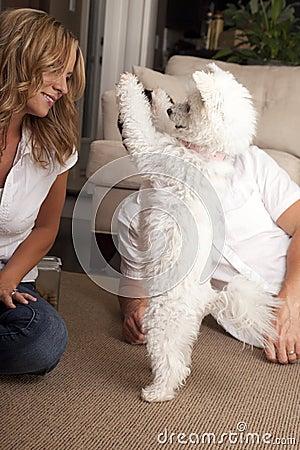 Couple teaching dog trick