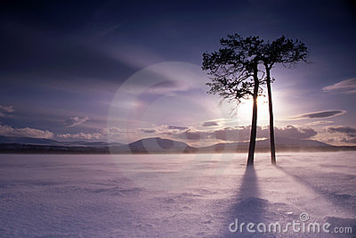 Couple of trees ob frozen lake