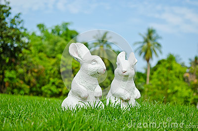 Couple of white rabbit