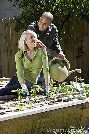 Couple working on vegetable garden in backyard