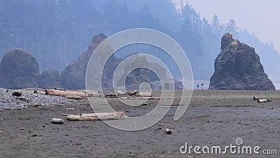 Couples marchant le long d'une plage avec de grandes falaises et dériver le bois banque de vidéos