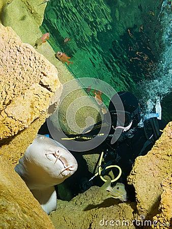 Courageous diver and Nurse shark