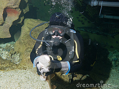 Courageous diver and small Nurse shark