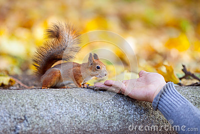 The courageous squirrel studies the man hand