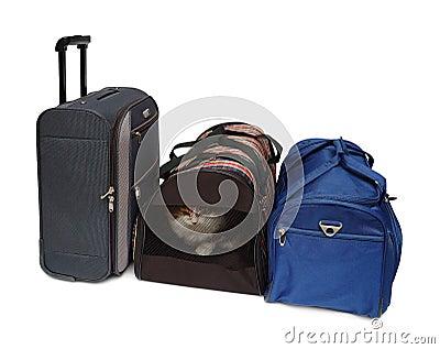 Course d animal familier de transporteur de sacs