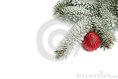 Covered with snow branch of a Christmas tree and red ball