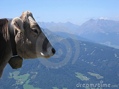 Cow | Austria mountain scenery