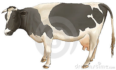 The Cow Costs And Looks. Stock Photo - Image: 4897800