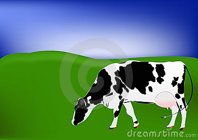 Cow of dairy breed