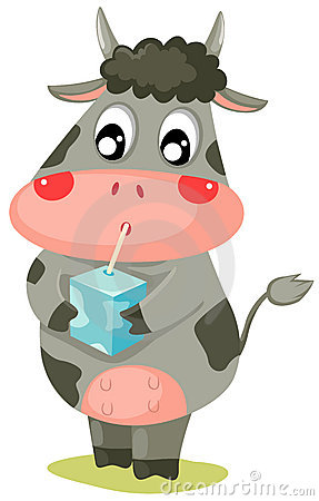 Cow drinking milk