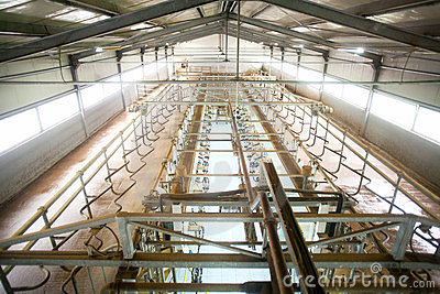 Cow Farm Milking System Stock Photos - Image: 24041443