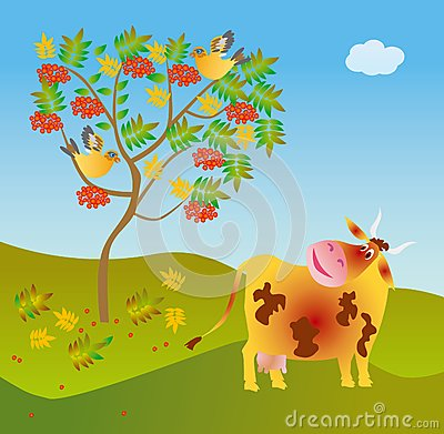 A cow looks at a wild ash