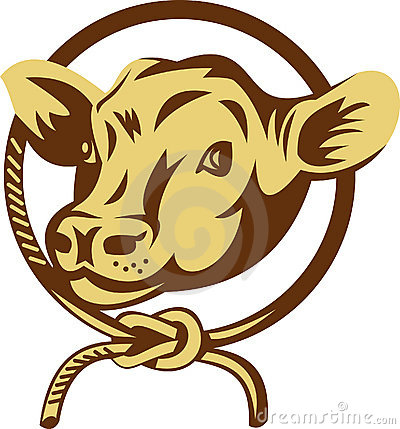Cow mascot tied square knot rope