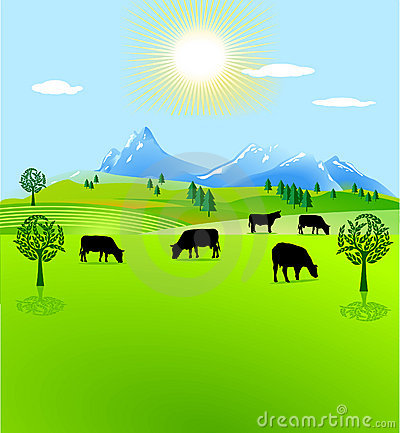 Cow paddock mountain pasture