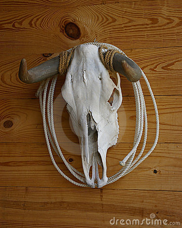 Cow Skull And Horns