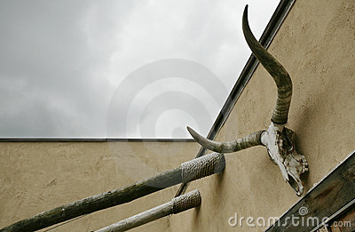 Cow Skull and Sky