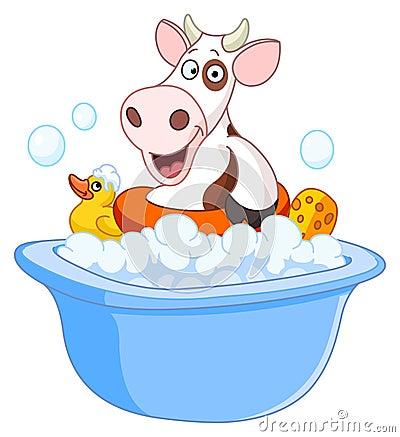Cow taking a bath