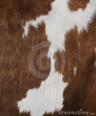 Cow texture