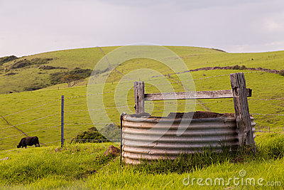 Cow and Water Tank