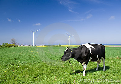 Cow and wind turbines