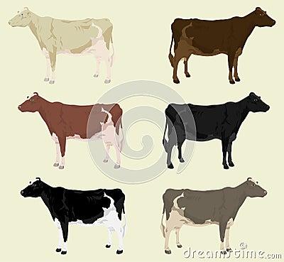 Free Cow3 Stock Photos - 17627983