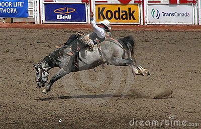 Cowboy on bucking bronco Editorial Stock Photo