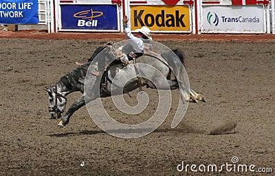 Cowboy on bucking bronco Editorial Stock Photo