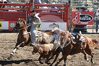 Cowboy jumping out to take down steer Editorial Photo