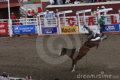 Cowboy riding bucking bronco Editorial Stock Image