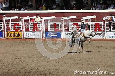 Cowboy riding bucking bronco Editorial Photography