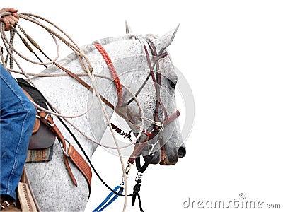 Cowboy s Pony