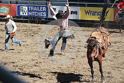 Cowboy thrown from bucking horse Editorial Stock Image