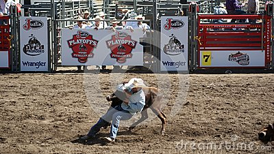 Cowboy wrestling a steer Editorial Photo