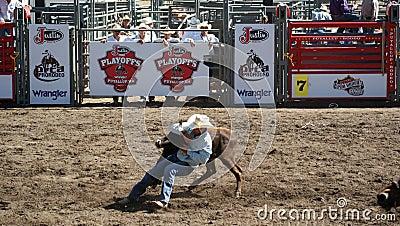 Cowboy wrestling a steer Editorial Photo