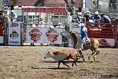 Cowboys team roping. Editorial Photography