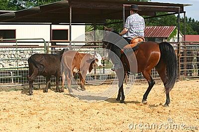 Cowhorse II