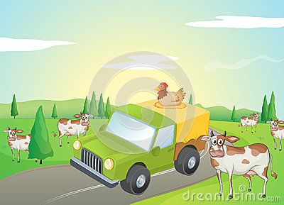 Cows and a chicken