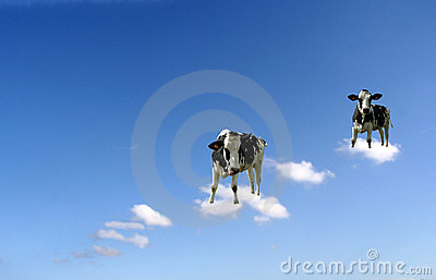 Cows on clouds