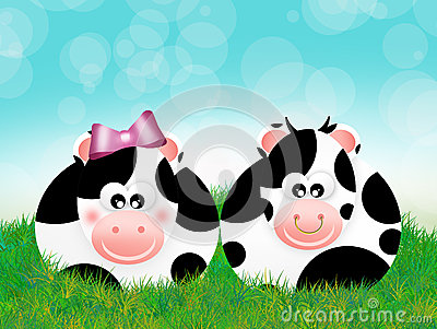 Cows couple