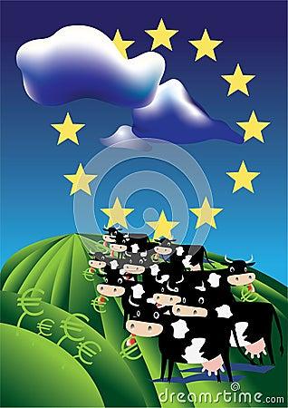 Cows in european field