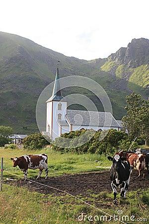 Cows facing the Church  of Varlberg