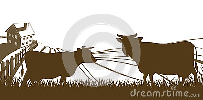 Cows and Farm Rolling Hills Landscape