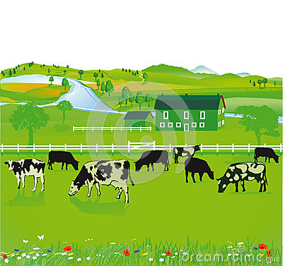 Free Cows Grazing In A Field Royalty Free Stock Images - 40196689