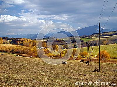 Cows grazing near Bobrovnik, Slovakia