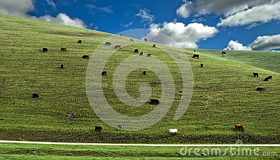 Cows Hillside