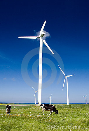 Cows and wind turbines.