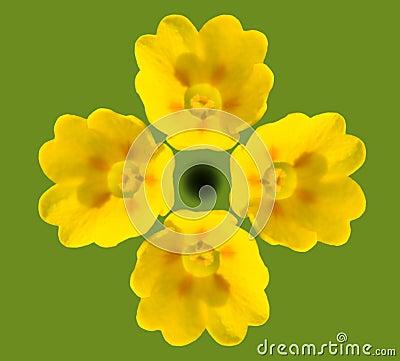 Cowslip Blooms