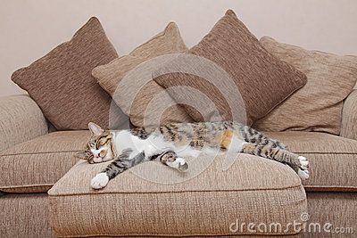 Cozy couch cat