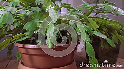 Cozy home decor Thuistuinconcept Groene pot bloemen op tafel stock footage