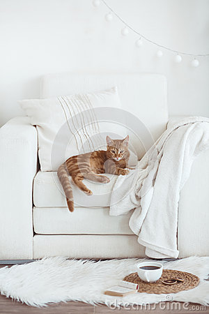 Free Cozy Interior Details Royalty Free Stock Images - 43797029